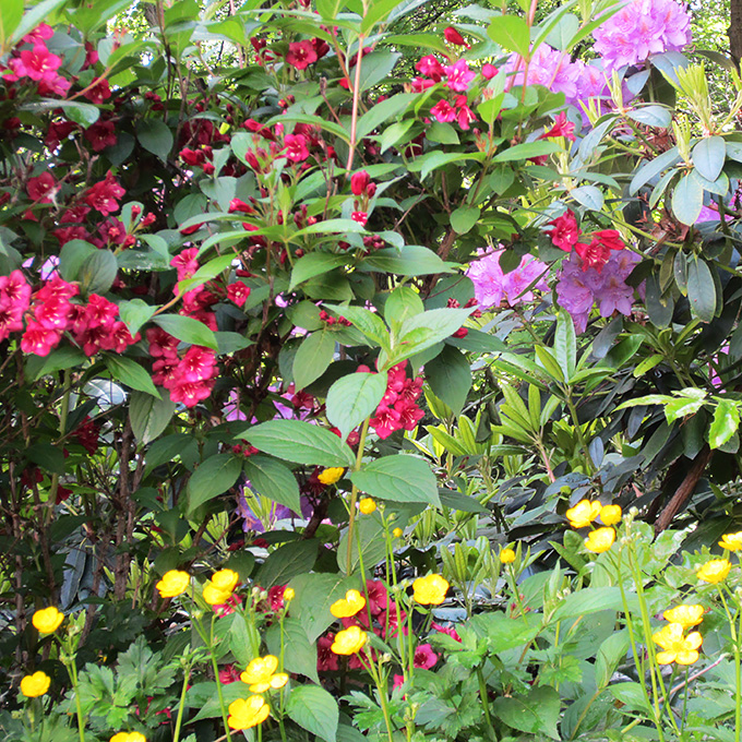 B&B-Tilburg-lush-garden